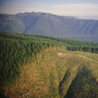 E-law - Planning - Planning and the Environment - Forestry